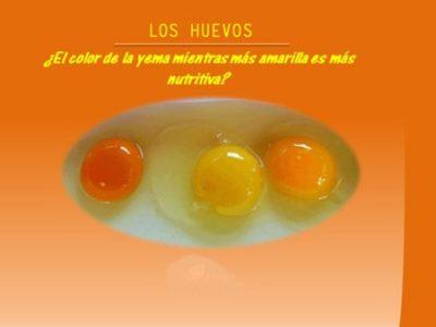 huevos-j-company-valencia-color-yema-46
